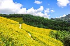 墨西哥向日葵自然美好 免版税图库摄影
