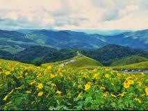 墨西哥向日葵领域 库存图片
