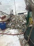 墨西哥湾海岸虾 图库摄影