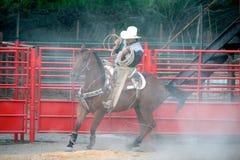 墨西哥牛仔实践的在马背上系住, TX,美国 库存图片