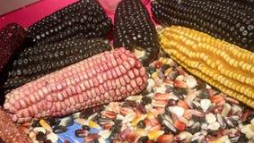 墨西哥玉米变化、白色玉米、黑玉米、蓝色玉米、红色玉米、野生玉米和黄色玉米在一个地方市场上在墨西哥 免版税库存照片