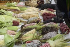 墨西哥玉米变化、白色玉米、黑玉米、蓝色玉米、红色玉米、野生玉米和黄色玉米在一个地方市场上在墨西哥 库存图片
