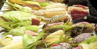 墨西哥玉米变化、白色玉米、黑玉米、蓝色玉米、红色玉米、野生玉米和黄色玉米在一个地方市场上在墨西哥 免版税库存图片