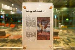 墨西哥的翼 库存图片