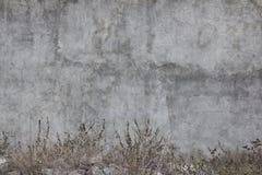 墨西哥的老和被忘记的墙壁 图库摄影