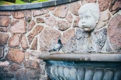 墨西哥- 9月20 :站立在有恼怒的天使投掷的水的雕象的一个喷泉旁边的Pidgeon在他的嘴外面 库存照片
