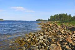 墨角藻属植物处于低潮中 库存图片