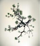 墨水样式杉树 免版税图库摄影