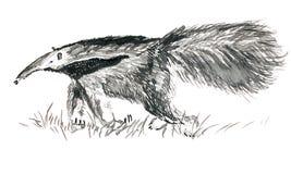 墨水被画的大食蚁兽 免版税库存照片