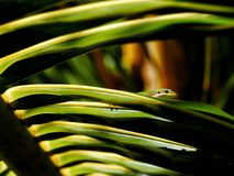 壁虎在自然生态环境 库存图片