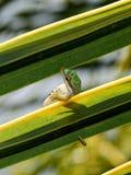 壁虎在自然生态环境 免版税库存照片