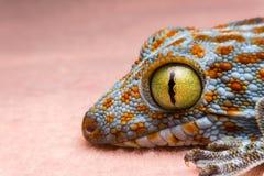 壁虎的眼睛 免版税库存照片