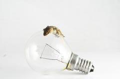 壁虎蜥蜴和电灯泡 免版税图库摄影