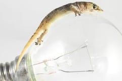 壁虎蜥蜴和电灯泡 库存照片