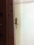 壁虎蜥蜴 库存照片