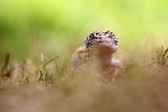 壁虎,动物,宏指令, bokeh,昆虫,自然, 免版税库存图片