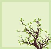 壁角结构树 库存图片