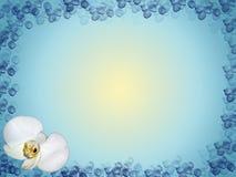 壁角设计花卉兰花 免版税图库摄影
