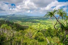 壮观的密林惊人的看法,考艾岛,夏威夷 库存图片