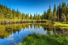 壮观的干净的森林湖, Retezat山,特兰西瓦尼亚,罗马尼亚,欧洲 库存照片