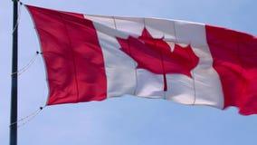 壮观的挥动在风的杆的国家标志加拿大旗子红色白色枫叶横幅在蓝天晴朗的背景 影视素材