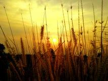 壮观的日落时间 库存照片