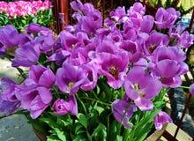 壮观的明亮的紫色花 免版税库存照片