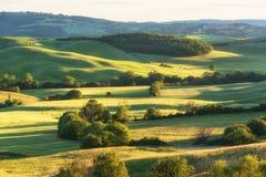 壮观的春天农村风景 托斯坎绿色波浪小山、惊人的阳光、美好的金黄领域和草甸惊人的看法  免版税图库摄影