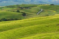 壮观的春天农村风景 托斯坎绿色波浪小山、惊人的阳光、美好的金黄领域和草甸惊人的看法  库存图片