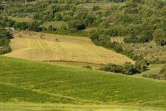 壮观的春天农村风景 托斯坎绿色波浪小山、惊人的阳光、美好的金黄领域和草甸惊人的看法  图库摄影
