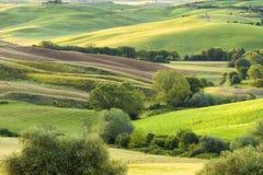壮观的春天农村风景 托斯坎绿色波浪小山、惊人的阳光、美好的金黄领域和草甸惊人的看法  免版税库存照片