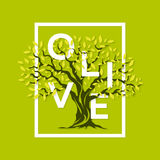 壮观的橄榄树 免版税库存照片