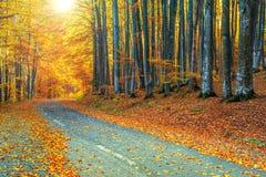 壮观的浪漫路在秋天五颜六色的森林里 免版税图库摄影