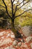 壮观的结构树 图库摄影