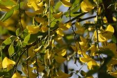 壮观的花黄色和太阳的正面图 库存图片