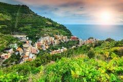 壮观的葡萄园和Manarola,意大利,欧洲老镇  免版税库存照片