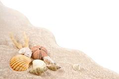 壳、珊瑚和干海顽童在沙子作为背景 库存图片