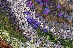 壳、葡萄、花和杉木针的自然构成 免版税图库摄影