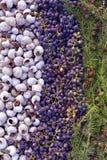 壳、葡萄和杉木针的自然构成与锥体 免版税库存图片