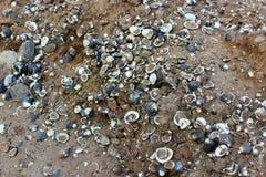 壳。 库存照片