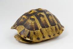 壳乌龟 库存图片