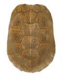 壳乌龟 免版税图库摄影