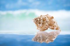 贝壳和反射与海洋、波浪和海景 库存图片