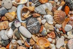 贝壳和小卵石纹理背景 库存照片