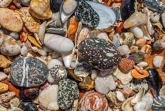 贝壳和小卵石纹理背景 库存图片