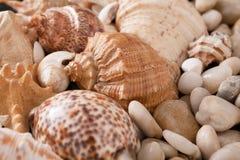 贝壳和小卵石背景,自然海滨石头 免版税库存照片