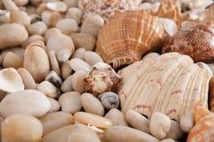 贝壳和小卵石背景,自然海滨石头 图库摄影