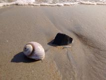 壳和岩石由海有微型波浪的 库存照片