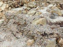 壳和岩石 库存图片