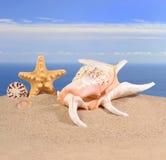 贝壳和海星在海滩沙子 图库摄影